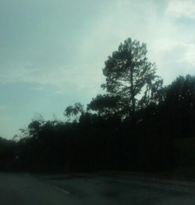 Tree on highway