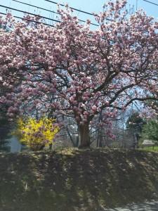Flowers Spring 2016